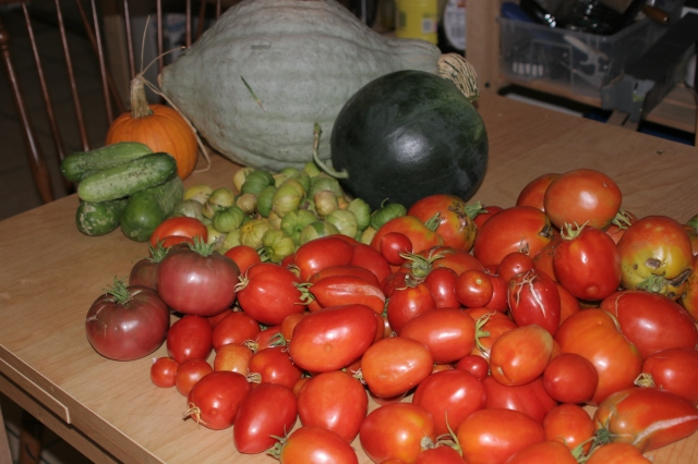 Late summer harvest