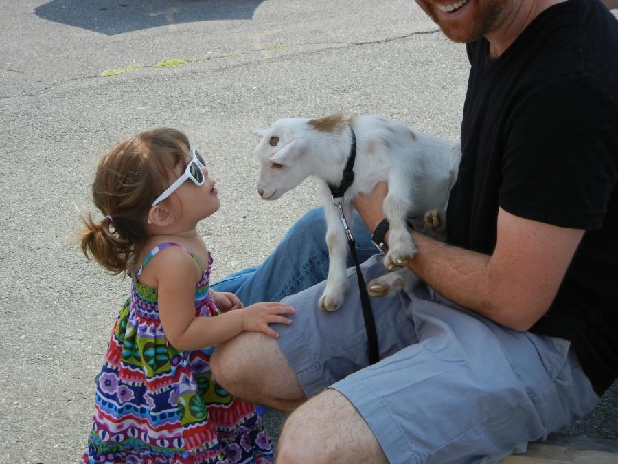 A goat kiss