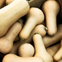 Dangerous Curves Ahead: Why Butternut Squash Is the New Sweet Potato