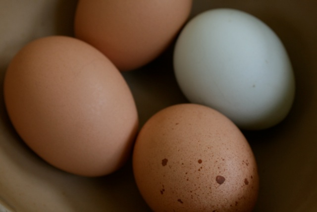 aracauna eggs