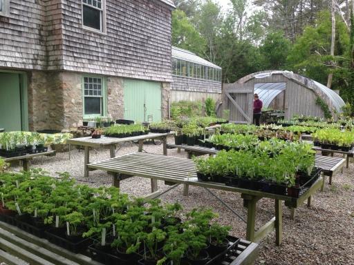 Heritage Plant Sale