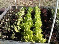 lettucehoophouse