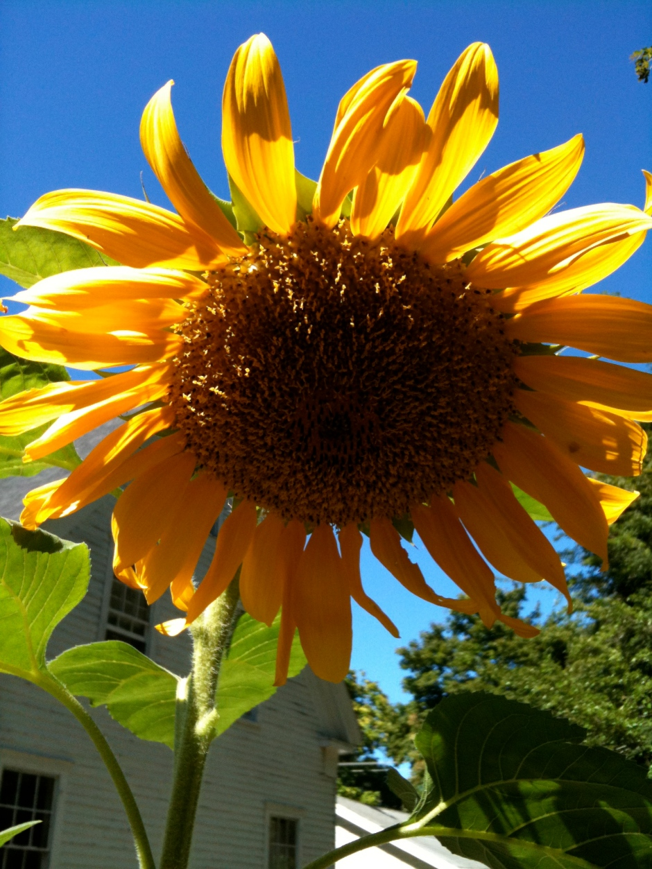 Dream of sunny days by joining a CSA today.