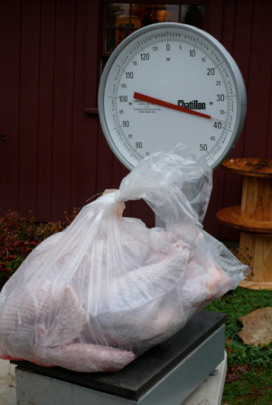 An 8-pound chicken is plenty for 4 meals, imagine an almost 40 pound turkey. Dave takes fine care of his birds.
