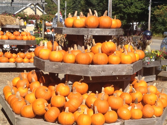 Pumpkin display at Williams Trading Post