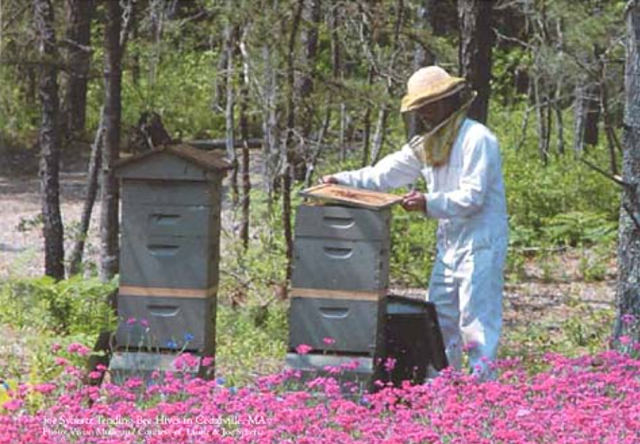 Tending the Hives