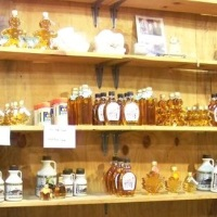 Sap to Syrup at Matfield Maple Farm