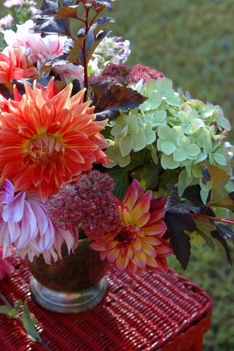 How To Grow Armfuls Of Dahlias For Cut Flowers Edible South Shore
