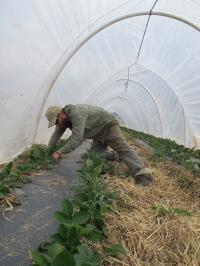 Growing food, new farmers and gardeners