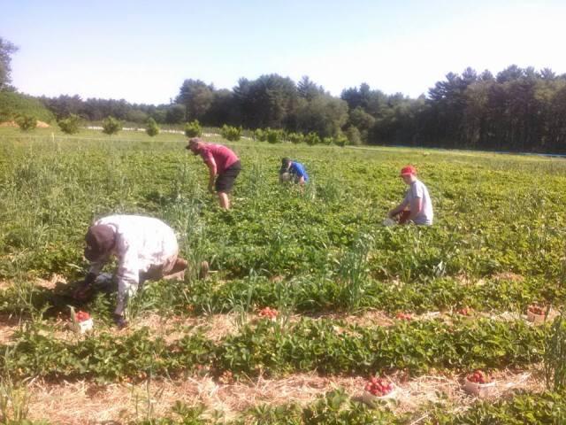 CN Smith Farm strawberry fields