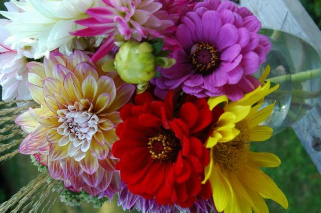 Dandelion House flowers