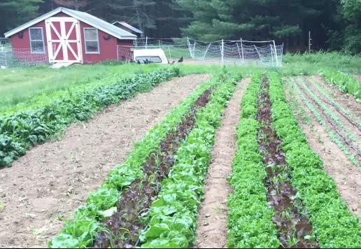 Web of Life Organic Farm field